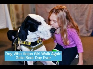 Dog Who Helps Little Girl Walk Again Gets Kindness Back In The Best Day Ever